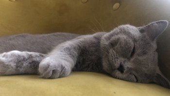 Zbiórka Kotek Edgar BŁAGA o wsparcie - miniaturka zdjęcia