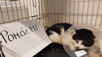 Zbiórka Na ratunek kotów - miniaturka zdjęcia