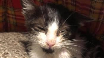 Zbiórka Kociak w stanie agonalnym... - miniaturka zdjęcia