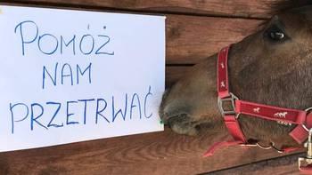 Zbiórka Ratuj Konie- POMÓŻ NAM PRZETRWAĆ - miniaturka zdjęcia