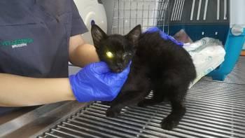 Zbiórka Ratowanie łapki kota po wypadku - miniaturka zdjęcia