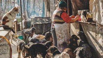 Zbiórka Zwierzęca wioska - miniaturka zdjęcia