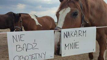 Zbiórka NAKARM MNIE - Ratuj konie - miniaturka zdjęcia