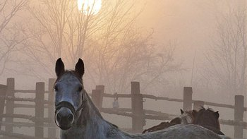 Zbiórka Solidarni dla koni Tary - puszka - miniaturka zdjęcia