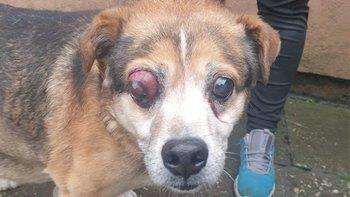 Zbiórka POMOC dla psiaka z chorym okiem - miniaturka zdjęcia
