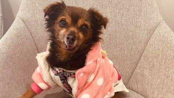 Zbiórka Psierocińcowi psim sierotkom - miniaturka zdjęcia