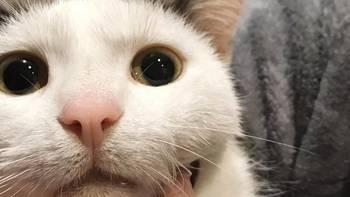 Zbiórka Kotek Sunny, nasze maleństwo.. - miniaturka zdjęcia