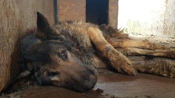 Zbiórka Leczenie uratowanych zwierzaków - miniaturka zdjęcia