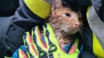 Zbiórka Rudy - kot z silnika - miniaturka zdjęcia