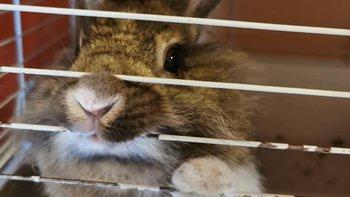 Zbiórka Pomóż nam dalej pomagać królikom - miniaturka zdjęcia