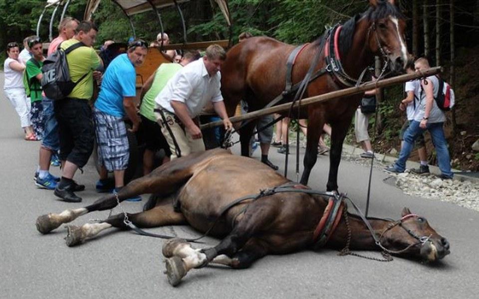 Zbiórka Ratujmy konie z Morskiego Oka! - zdjęcie główne