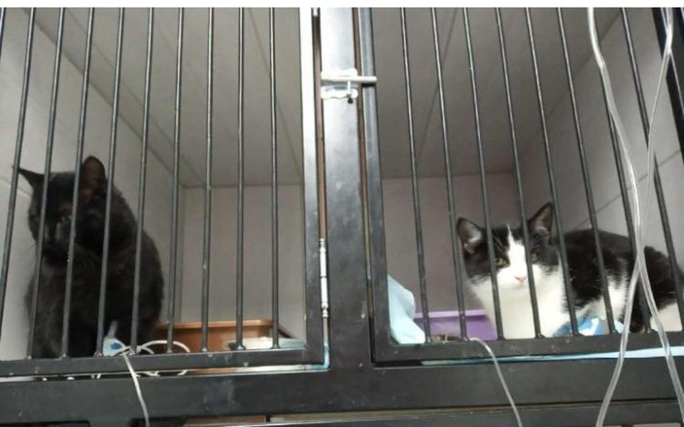 Zbiórka Na leczenie kotów z Podhala - zdjęcie główne