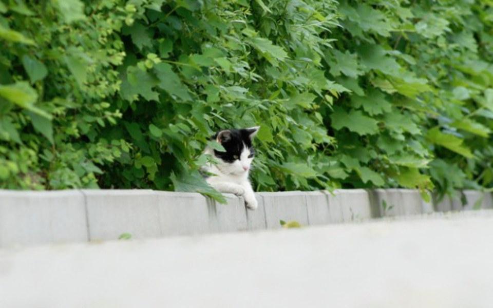 Zbiórka Pomóż krakowskim dzikuskom! - zdjęcie główne