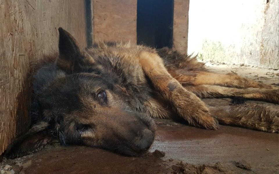 Zbiórka Leczenie uratowanych zwierzaków - zdjęcie główne