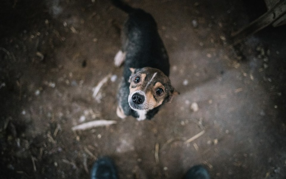 Zbiórka Karmimy zwierzęta w potrzebie - zdjęcie główne