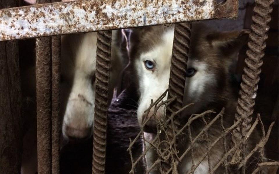 Zbiórka Fabryka ras - psie losy - zdjęcie główne