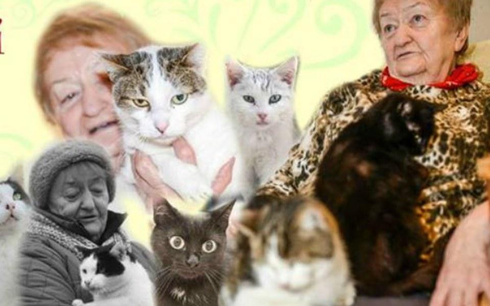 Zbiórka Pomóż ponad 30 kotom! - zdjęcie główne