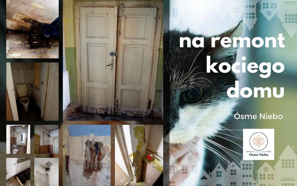 Zbiórka na remont kociego domu - zdjęcie główne