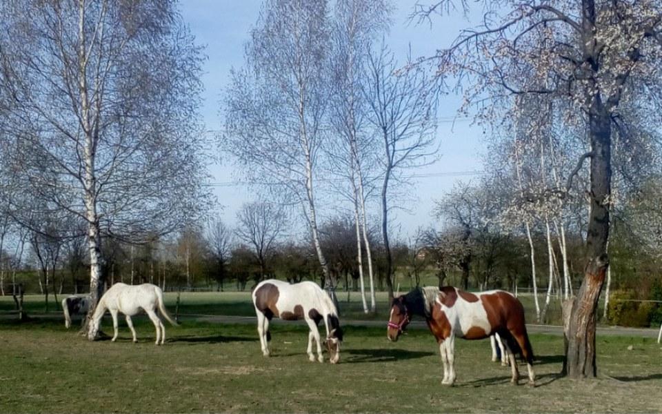Zbiórka Ratujmy konie w TOBIANO - zdjęcie główne