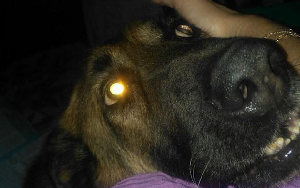 Zbiórka Pomoc na leczenie bezdomnego psa - zdjęcie główne