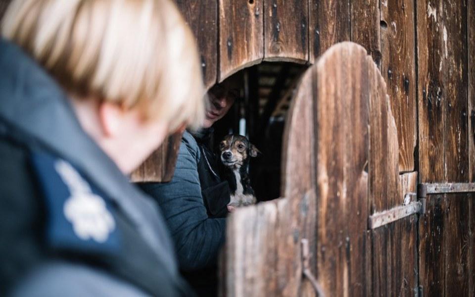 Zbiórka Na pomoc skrzywdzonym zwierzętom - zdjęcie główne