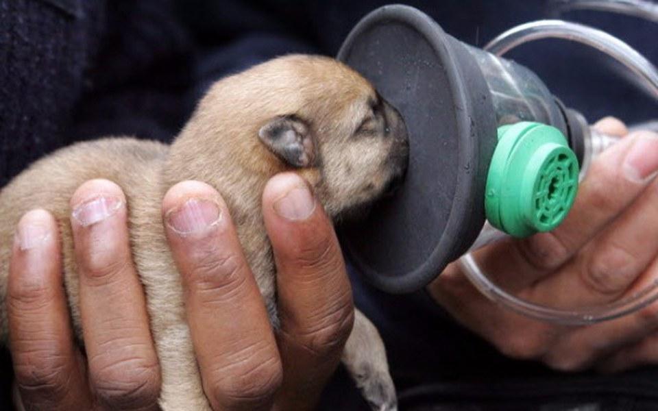 Zbiórka Zestaw reanimacyjny dla zwierząt - zdjęcie główne