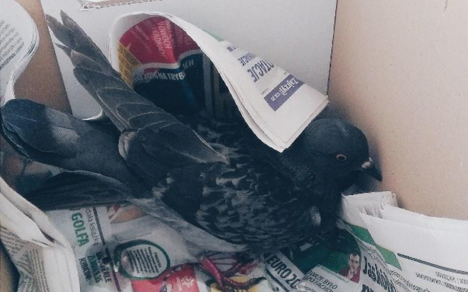 Zbiórka Leczenie ptaków miejskich - zdjęcie główne