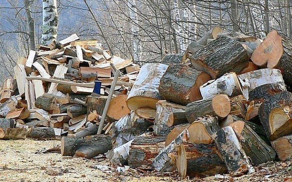 Zbiórka Ktoś wycina drzewa-My sadzimy! - zdjęcie główne