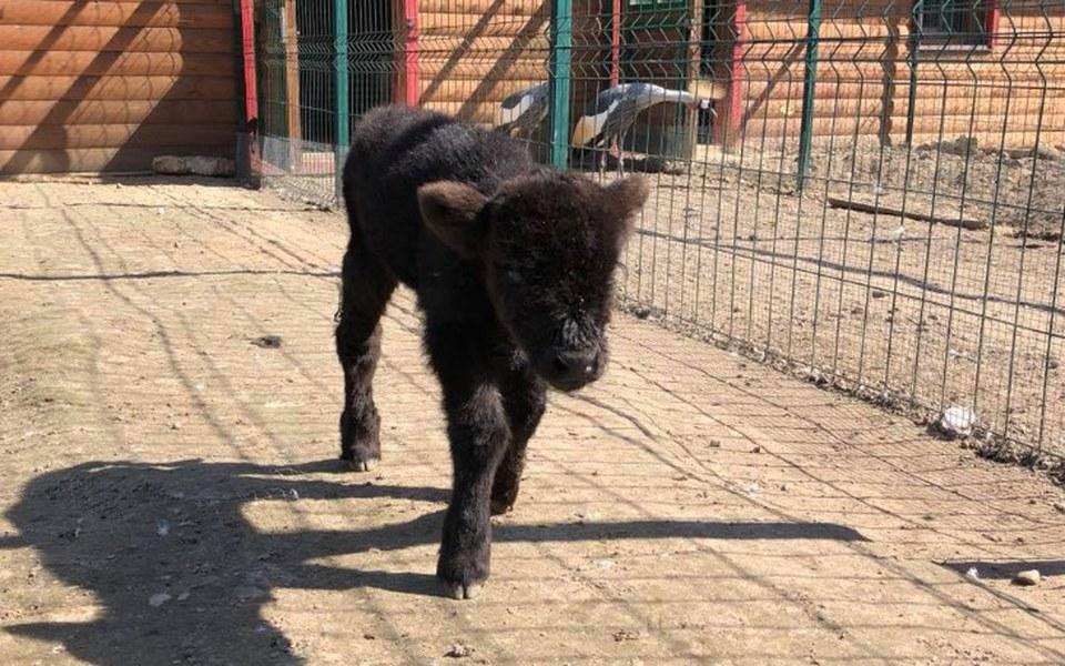 Zbiórka Pomoc zwierzętom z Bałtowa  - zdjęcie główne