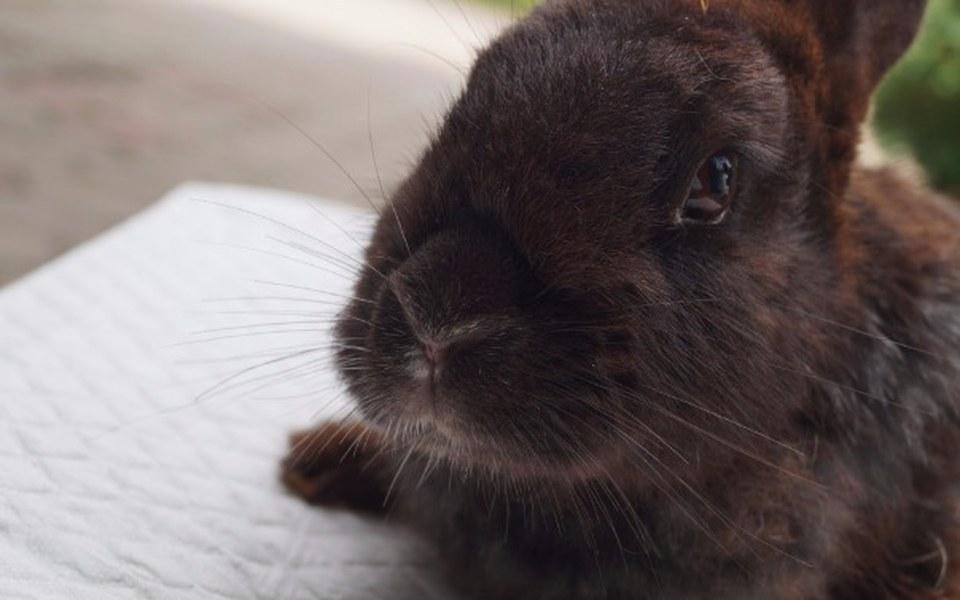 Zbiórka 2 interwencje, 36 królików - zdjęcie główne
