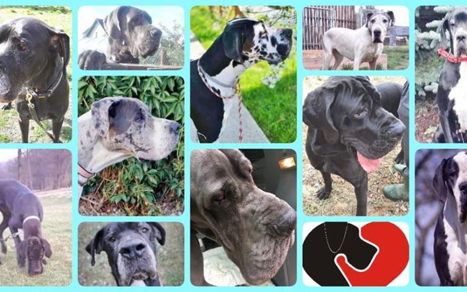 Zbiórka Adopcyjnym dogom na przeżycie - zdjęcie główne