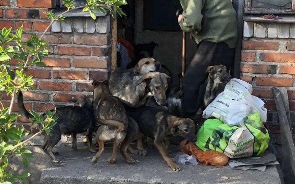 Zbiórka Kolejne 30 psów uratowane - zdjęcie główne