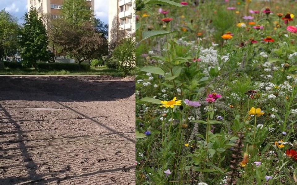 Zbiórka Raj dla pszczół, trzmieli,motyli - zdjęcie główne