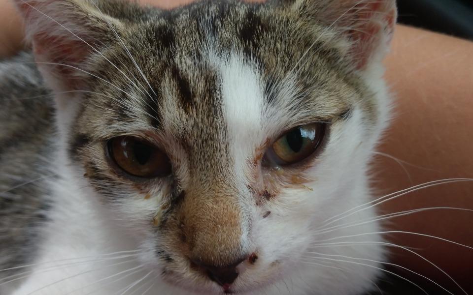 Zbiórka Na karmę dla kotów wolnożyjących - zdjęcie główne