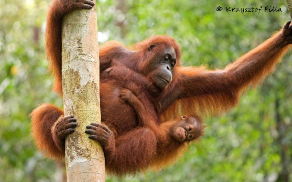 Zbiórka Ochrona lasów deszczowych - zdjęcie główne