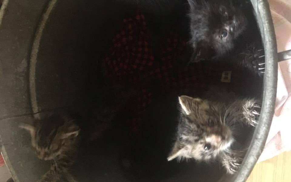 Zbiórka Na pomoc kociakom z beczki - zdjęcie główne