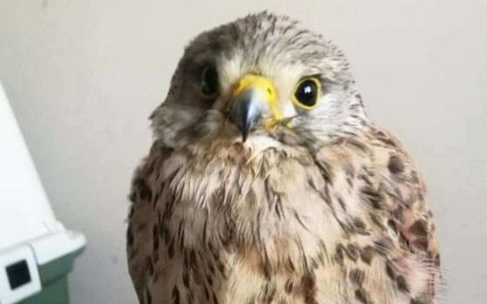 Zbiórka Ratujemy ptaki - zdjęcie główne