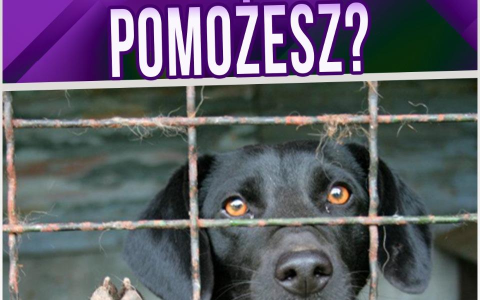 Zbiórka Bezdomne zwierzęta w Łódzkiem - zdjęcie główne