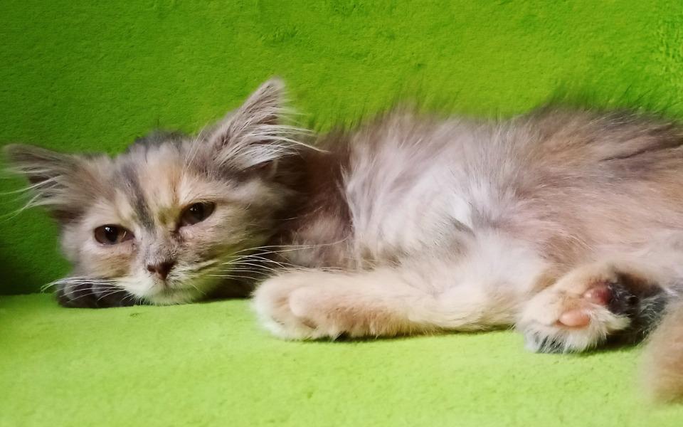 Zbiórka Malutka kotka Malaga z FIP - zdjęcie główne