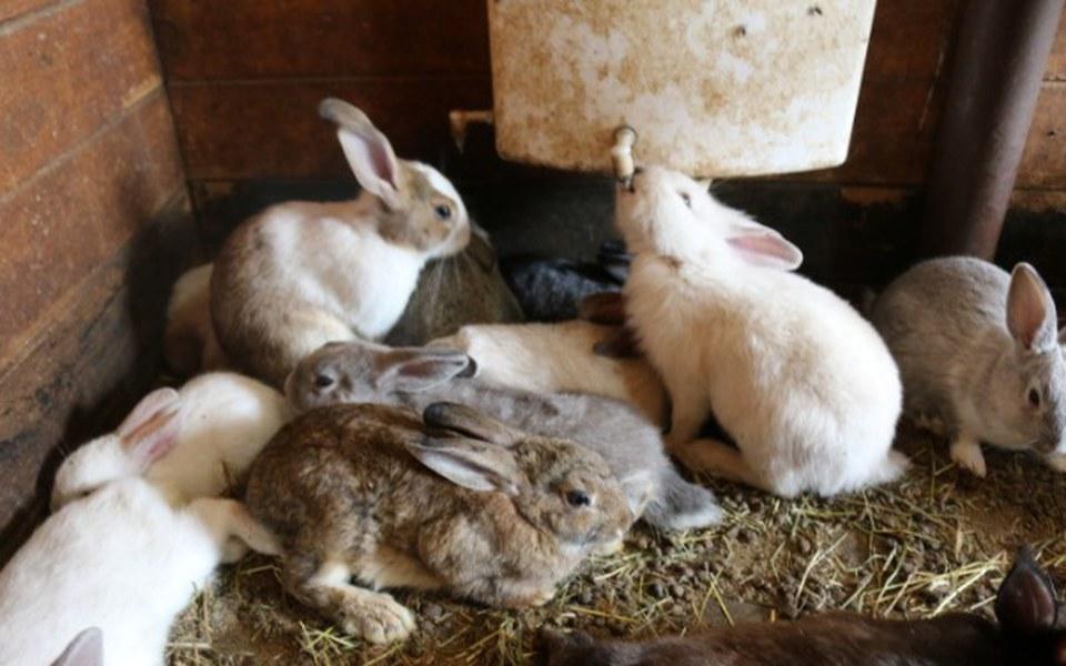 Zbiórka 123 króliki z agroturystyki - zdjęcie główne