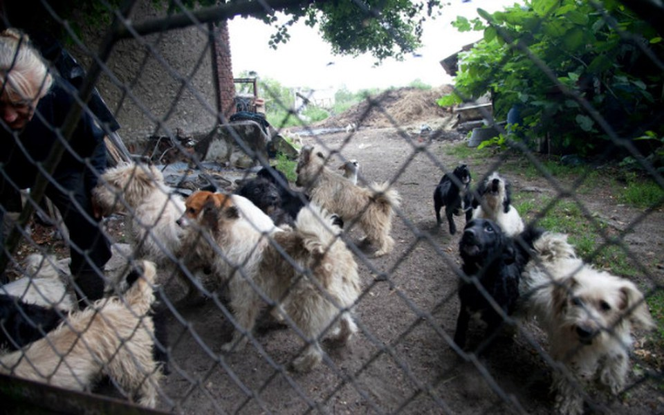 Zbiórka Głodne psy i koty - zdjęcie główne