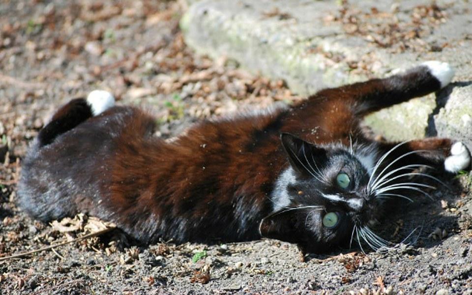 Zbiórka Wspomóżmy koty wolno żyjące - zdjęcie główne