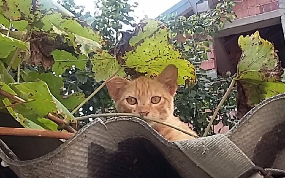 Zbiórka Sterylizacja bałkańskich kotek! - zdjęcie główne