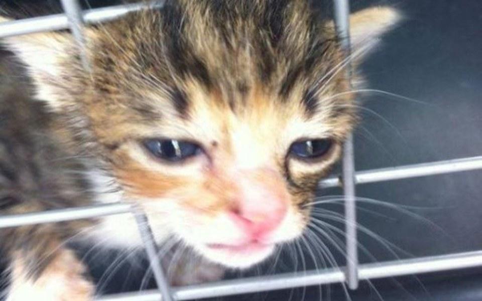 Zbiórka Kociaki zbierają na lepsze życie - zdjęcie główne