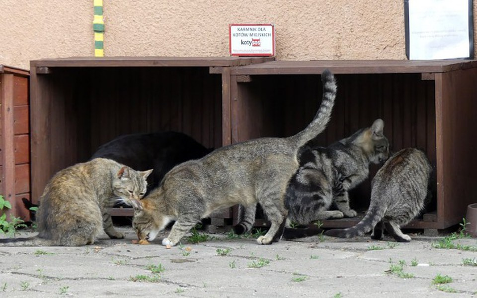 Zbiórka Nakarm miejskie koty. - zdjęcie główne