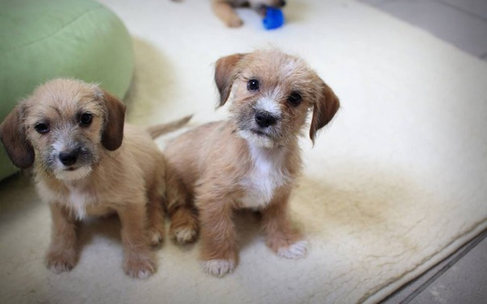 Zbiórka Wybiegi dla psów - zdjęcie główne