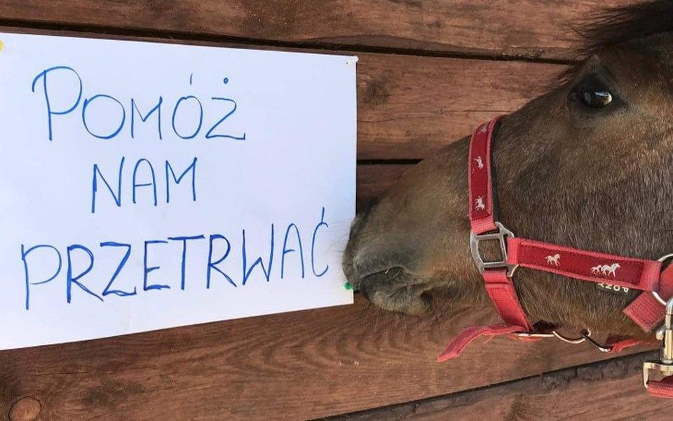 Zbiórka Ratuj Konie- POMÓŻ NAM PRZETRWAĆ - zdjęcie główne