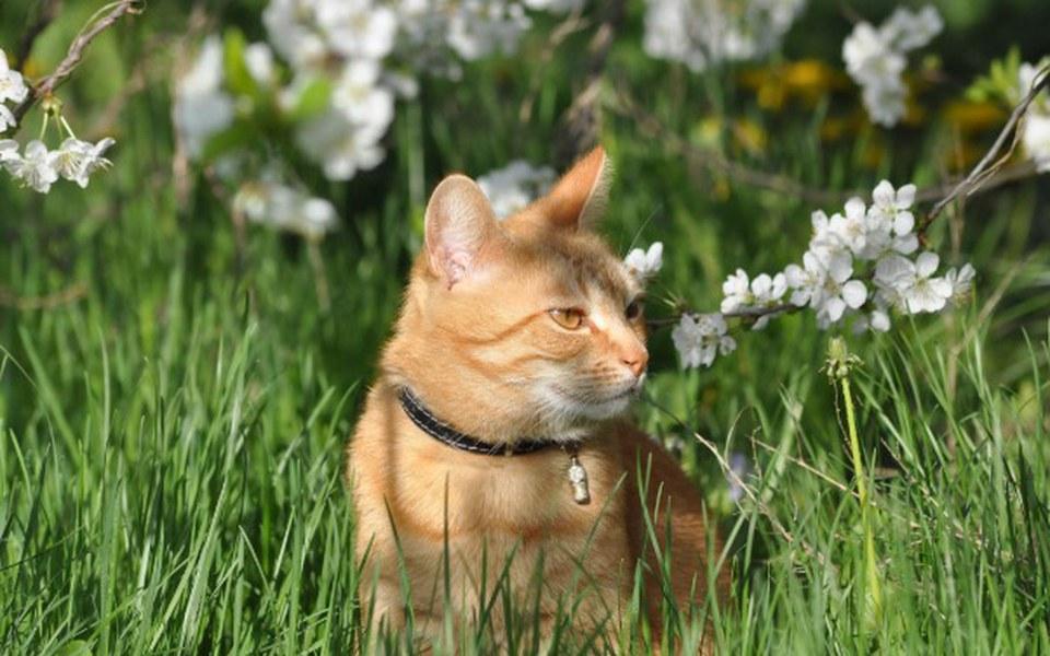 Zbiórka Zajączek dla Kotka - zdjęcie główne