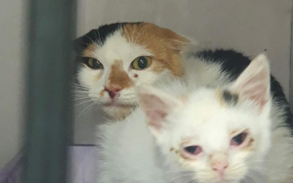 Zbiórka Na leczenie podhalańskich kotów - zdjęcie główne