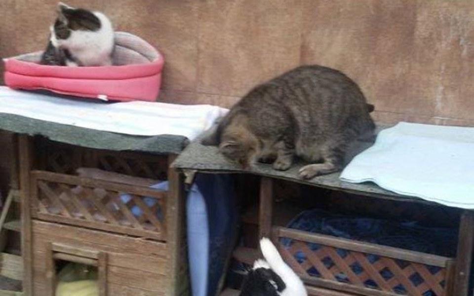 Zbiórka  Budki dla bezdomnych kotów... - zdjęcie główne